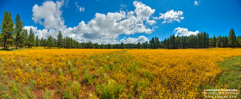 Yellow Field along Schnebly Hill Road