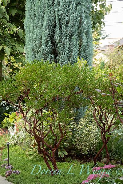 Lisa Bauer - designer's garden_1219.jpg
