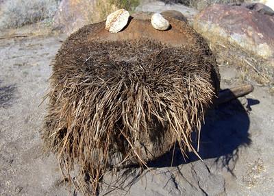 Anza Borrego Palm Canyon