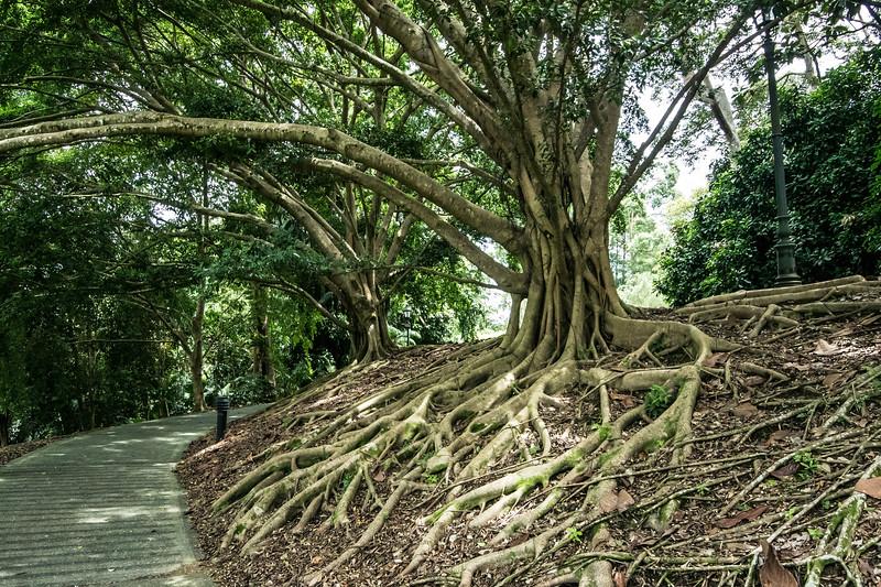 2017JWR-Singapore-233.jpg