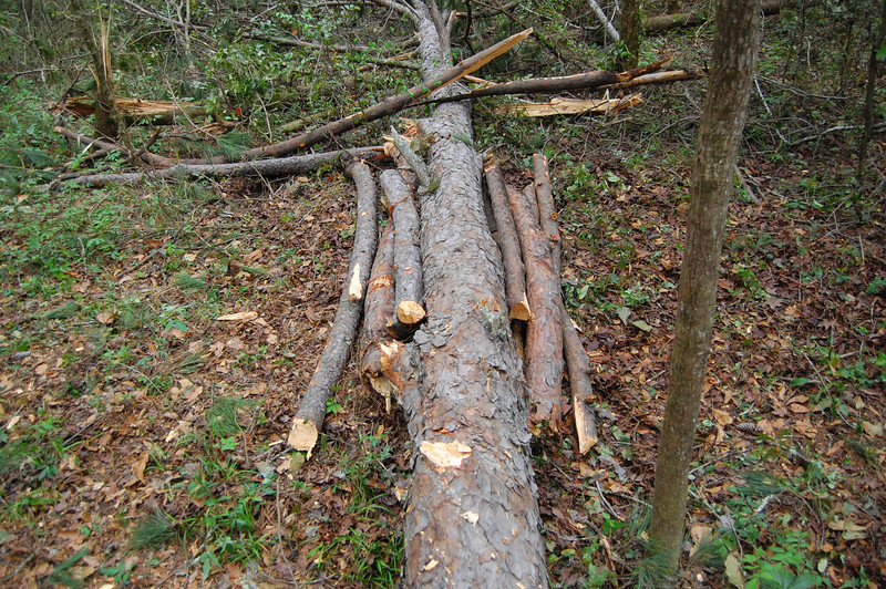 I stacked a few branches into a semi-stable pyramid for the time being. The big pine is solid - no decay. I wasn't ready to tackle that with just a Pulaski and zero calories. I'm standing on the log right over the original trail, looking eastward.