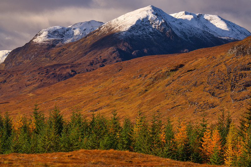 Scottish Pines and Snow-Capped Hills, Scotland Highlands