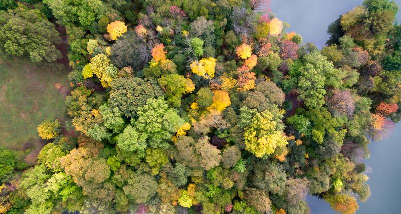 Aerial view of foliage.jpg