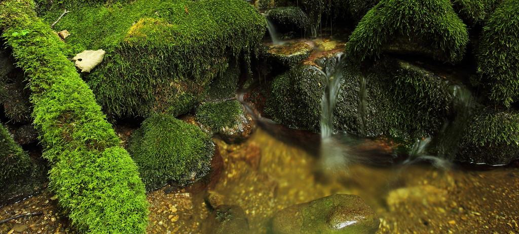 IMAGE: http://www.mikeswildlife.com/photos/i-KvHjsZj/0/XL/i-KvHjsZj-XL.jpg
