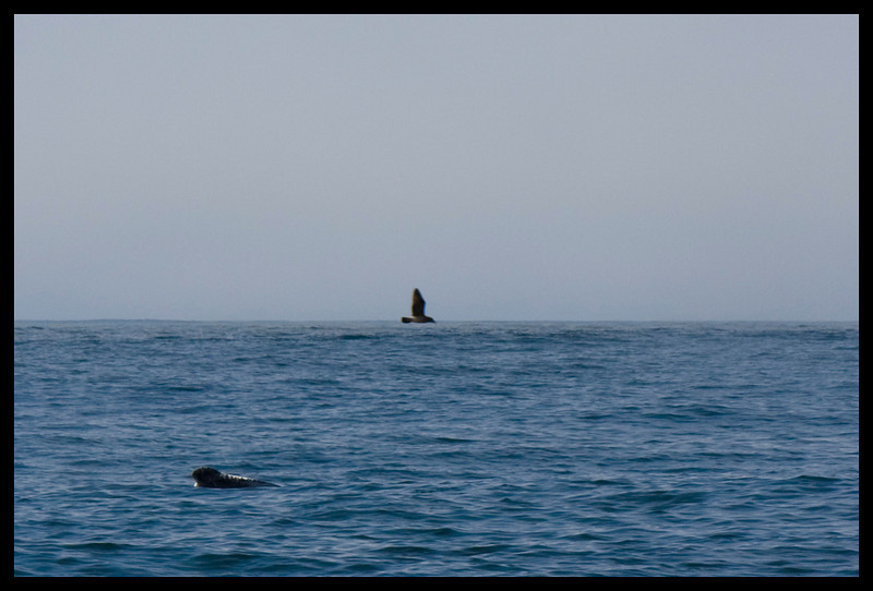 One whale waves at us, and the seals say - hey, look at me, too!