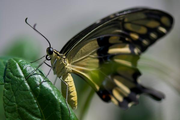 Butterfly Farms 8.15.15