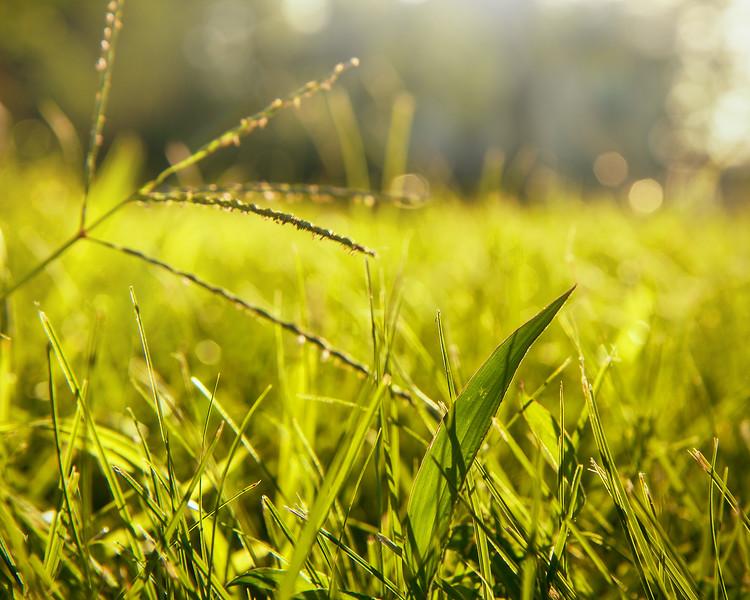Bokeh Grass-.jpg
