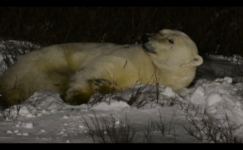 sleeping_bear_04.mov