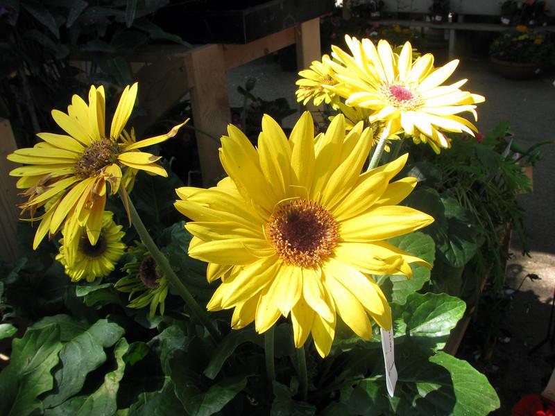 nursery flower.jpg