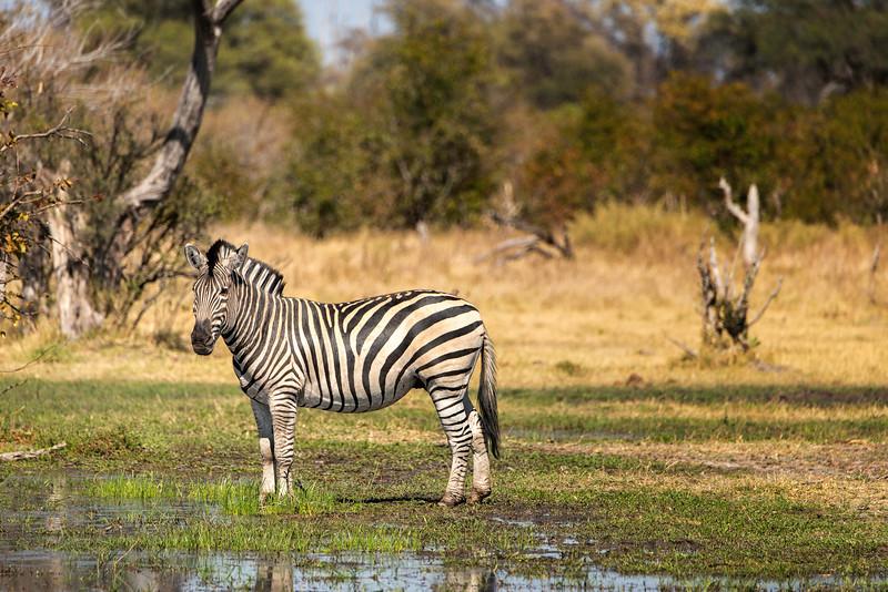 2014-08Aug-Okavango Masters-31-Edit.jpg