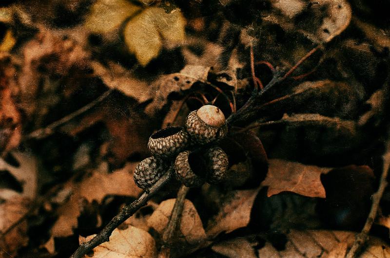 Acorn cluster