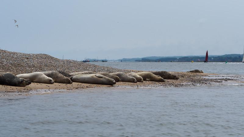 Seal boat tour