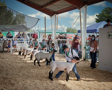 WPJLS Lambs