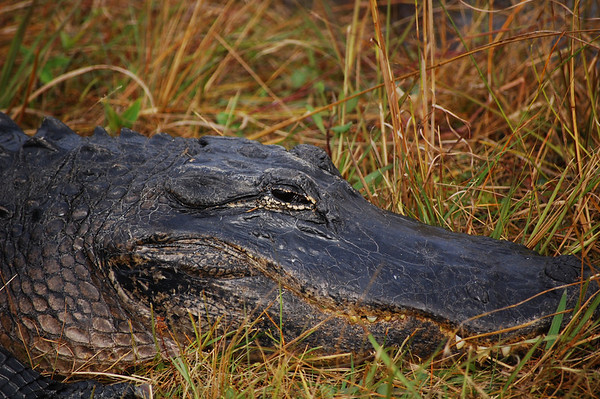 Adventures in the Everglades & Key Biscayne National Parks