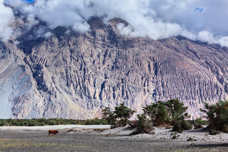 Nubra valley, Ladakh, India