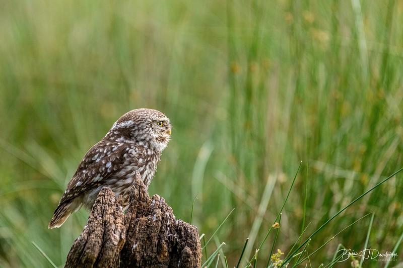 The Little Owl Shoot-6651.jpg