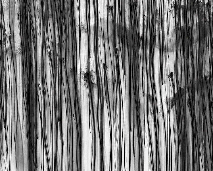 Nerve series no. 4