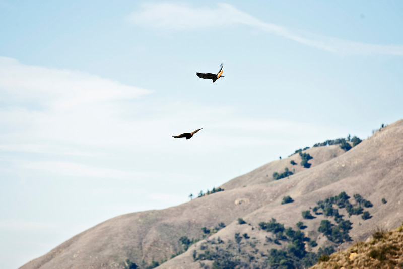 20110101_Palomar Mountain_0305.jpg