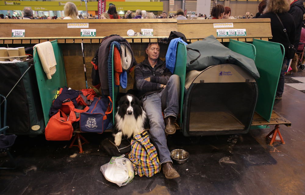 Description of . A man sleeps as he sits besides a Border Collie on the first day of Crufts dog show at the NEC on March 6, 2014 in Birmingham, England. Said to be the largest show of its kind in the world, the annual four-day event, features thousands of dogs, with competitors traveling from countries across the globe to take part. Crufts, which was first held in 1891 and sees thousands of dogs vie for the coveted title of 'Best in Show'.  (Photo by Matt Cardy/Getty Images)