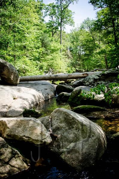 Forest_Hill_WM-1764.jpg