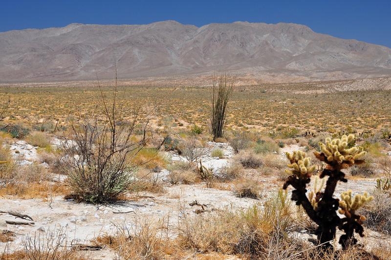 The Anza Borego desert.