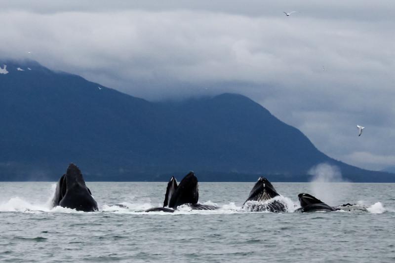 Alaska 2009-257.jpg
