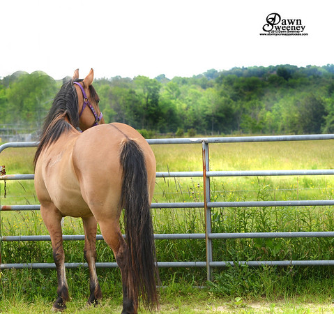 Tracys new mare Squirrel 8 years old