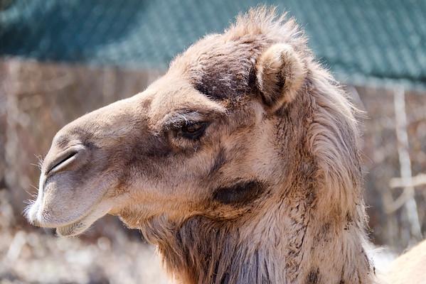 Denver Zoo 3-16