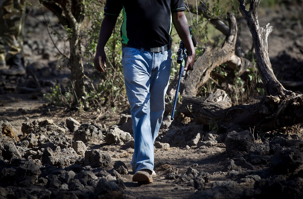 . In this Tuesday, Feb. 19, 2013 photo, Dr. Jeremiah Poghon walks with his tranquilizer gun as he and a team from the Kenya Wildlife Service (KWS) and the International Fund for Animal Welfare (IFAW) track an elephant to fit it with a GPS-tracking collar to monitor migration routes and to help prevent poaching, at the Kimana Wildlife Sanctuary next to Amboseli National Park in southern Kenya, near the border with Tanzania. (AP Photo/Ben Curtis)