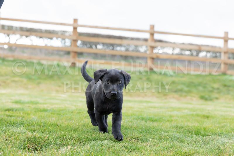 Weika Puppies 24 March 2019-8783.jpg