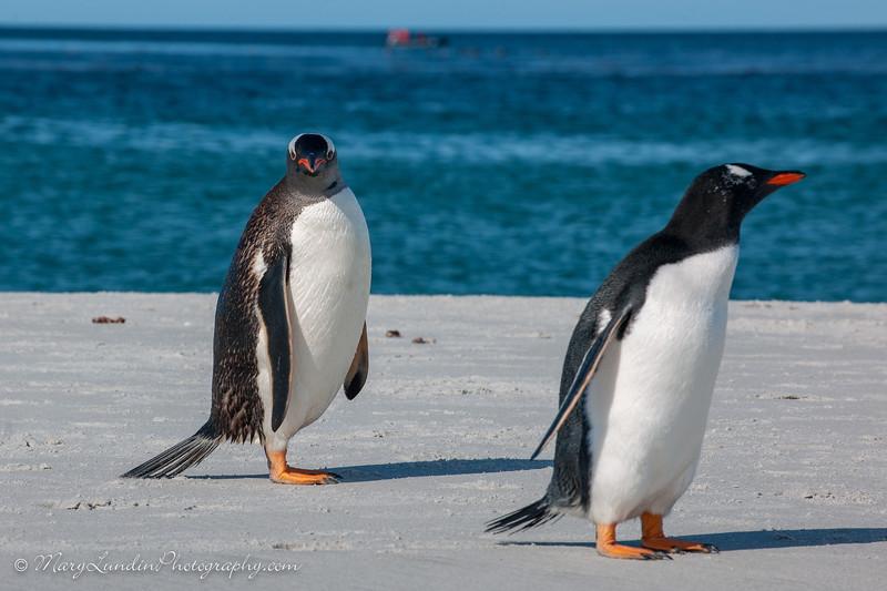 Antarctic-198