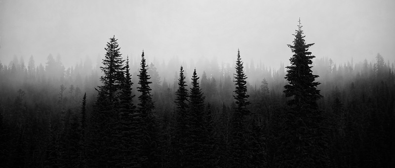 HLW Ranier B&W Wide Trees Fog.jpg