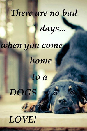 DOGS - 2 CREATE - Quotes -
