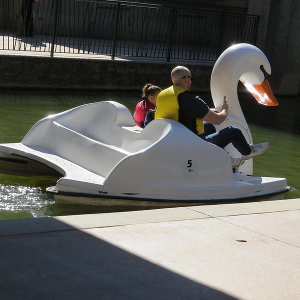 paddle ducks2.JPG