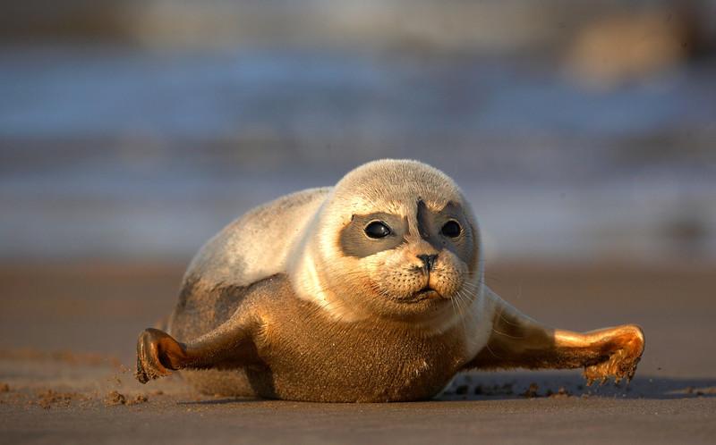 Seal Pup - 8025.jpg