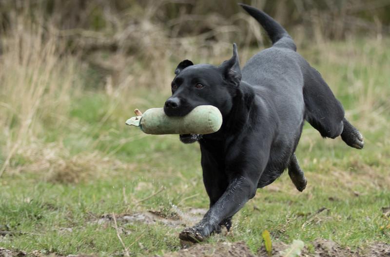 Dogs-5091.jpg