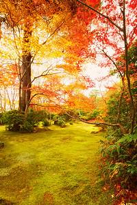 Garden in Red