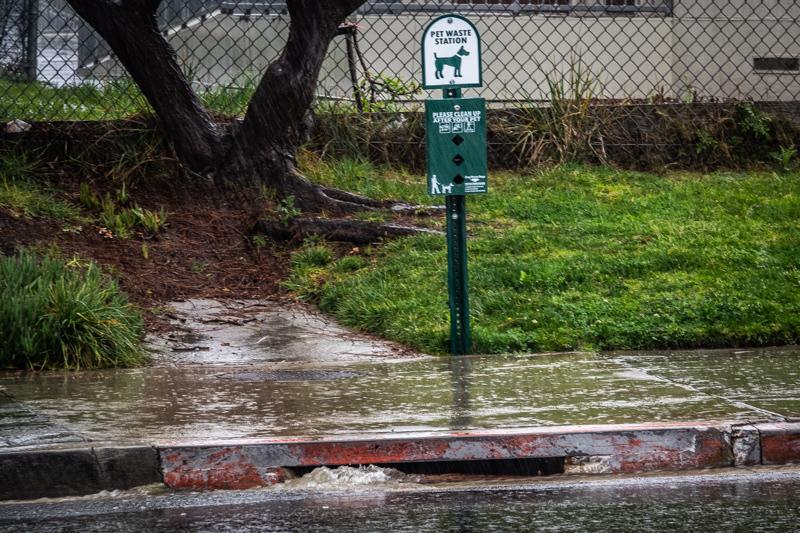 March 6 - Rainstorm!.jpg