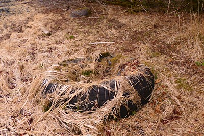 Found Another Old Tire In The Tide Zone April 2013, Cynthia Meyer, Chichagof Island, Alaska
