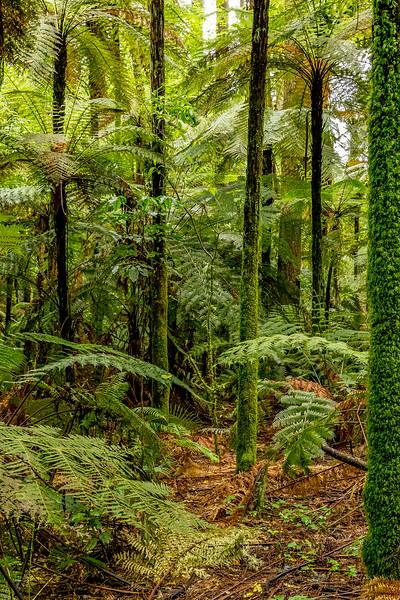 Sattes Grün m Whakarewarewa Forest
