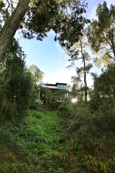 websize Rogers Street Treetop House for Sale-9873.jpg