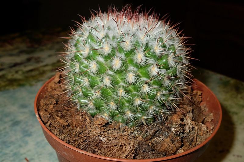 2017-11-01 cactus-002.JPG