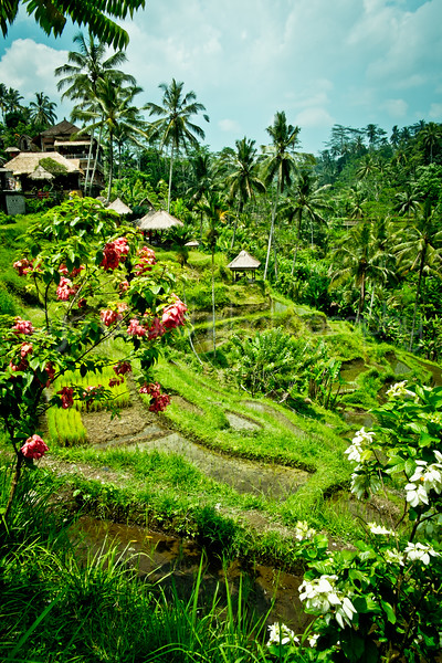 Bali Feb 2014 (32 of 319).jpg