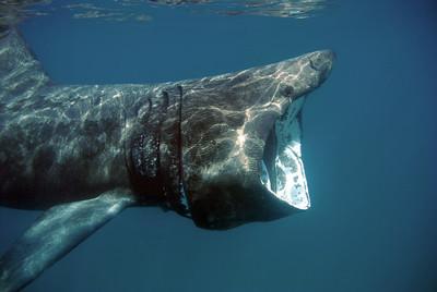 uk underwater