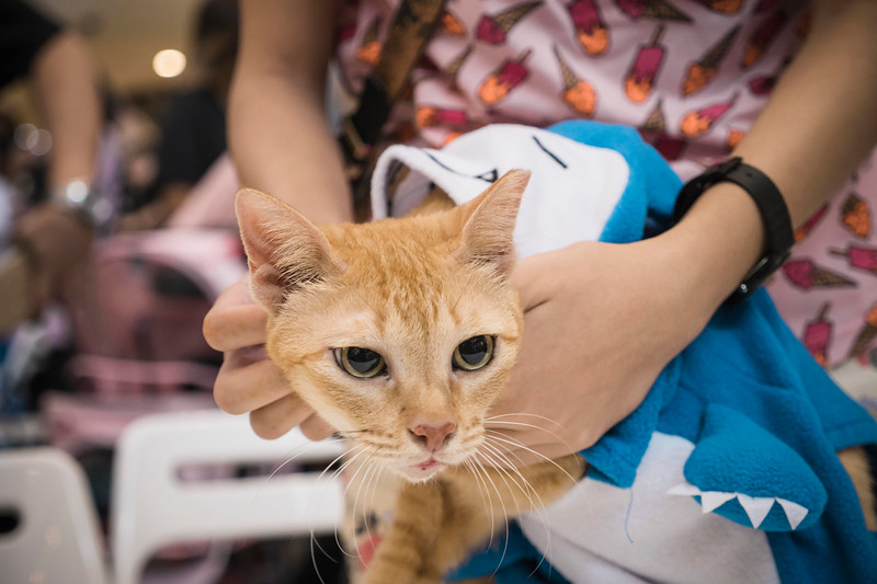 VividSnaps-The-Seletar-Mall-CAT-Dress-Up-Contest-125.jpg