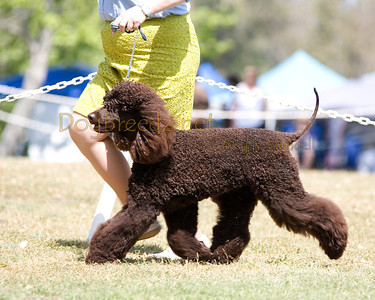 2012 LMKC - Irish Water Spaniels