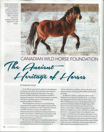 6 2013 Jun 7 - Canadian Horse Journal - Wild Horses*