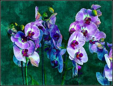 Orchids Purple Fantasy