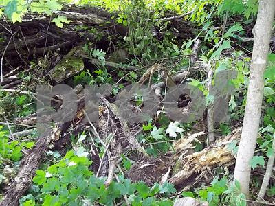 smith-county-sets-up-dumpsite-for-tree-green-vegetation-debris