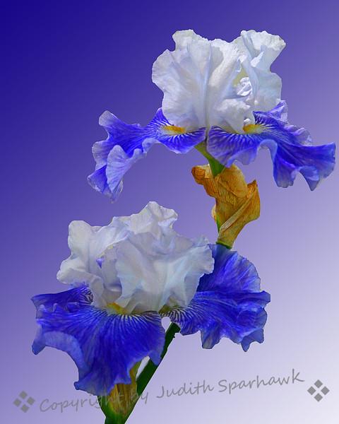 Blue & White.jpg